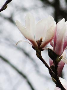 printemps_2010_003
