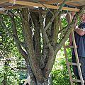 Un week-end les pieds dans l'arbre