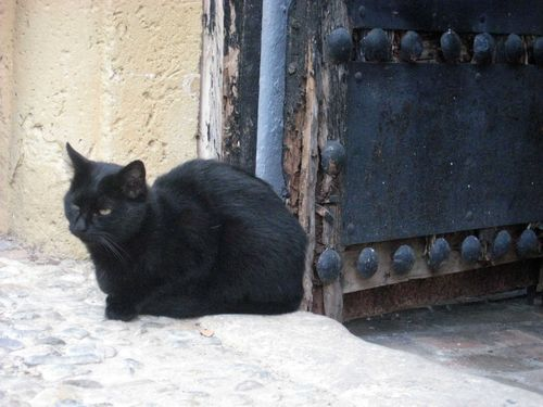 chat Grazalema 2