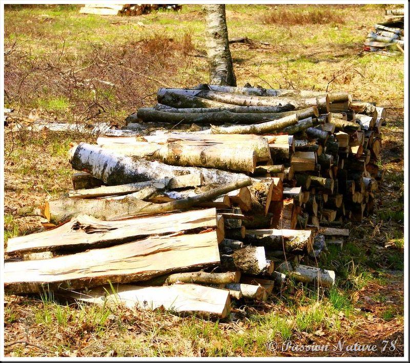 Le bois en forêt (24)