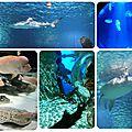 Découvrir l'aquarium sea life avec les octonauts
