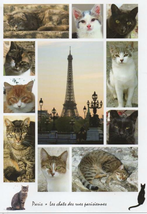 rencontres chats