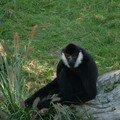 singe zoo des sables