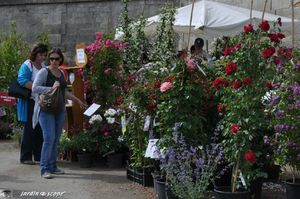 stand des Roses anciennes André Eve