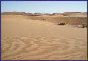 Murs de sable éprouvants pour les dromadaires