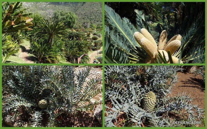 2017-10-09 jardin botanique6