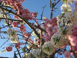 fleurs_en_ciel___2_