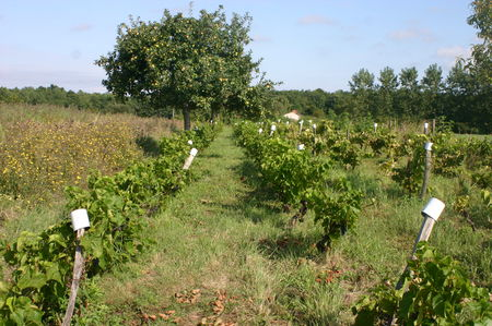 rent_e_2008_et_vignes_pr__vendages_044