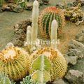 visite d'une bananeraie_plantes grasses_104