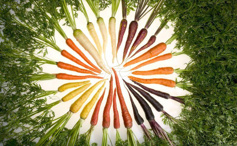 variété de couleur de la carotte