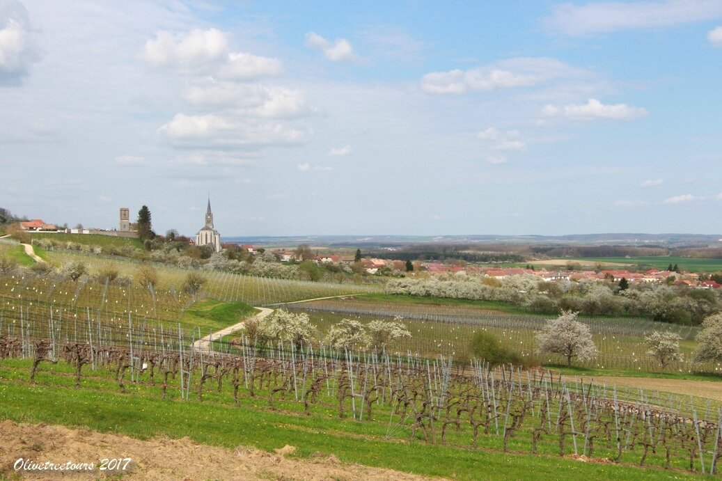 ... Les vignes et vergers du Toulois / The vineyard and orchards near Toul