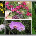 Une expo d'orchidees