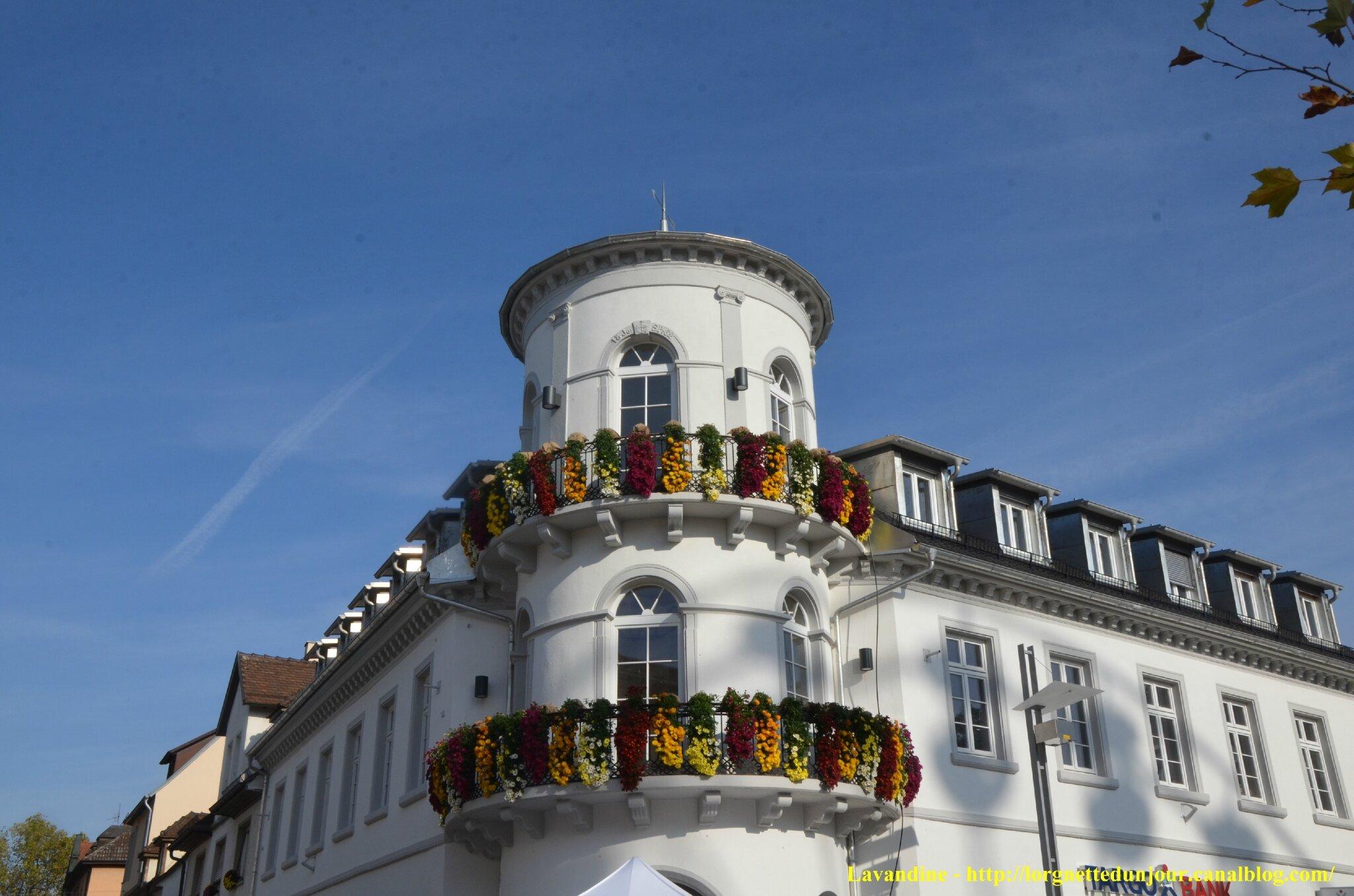 10/11/14 : Chrysanthema fin