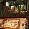S'amuser à strasbourg : le musée zoologique