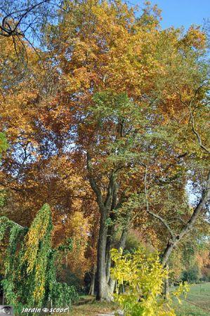 Platane-en-automne