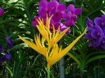 yellow_exotic_flower