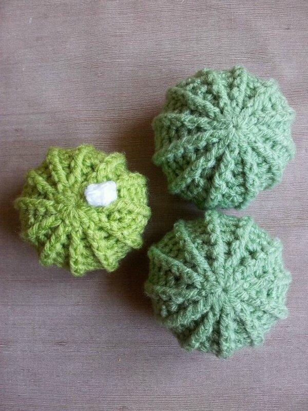 cactus vert et vert