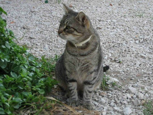 chat Dubrovnic 2
