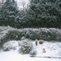 Photos de mon jardin !