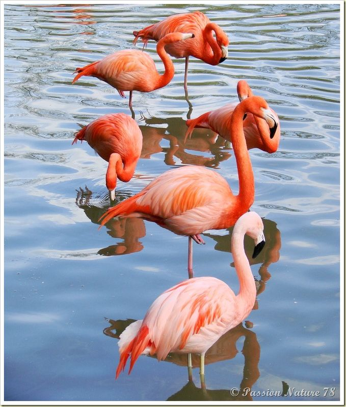 Les flamants roses (23)