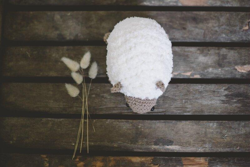 mouton-7