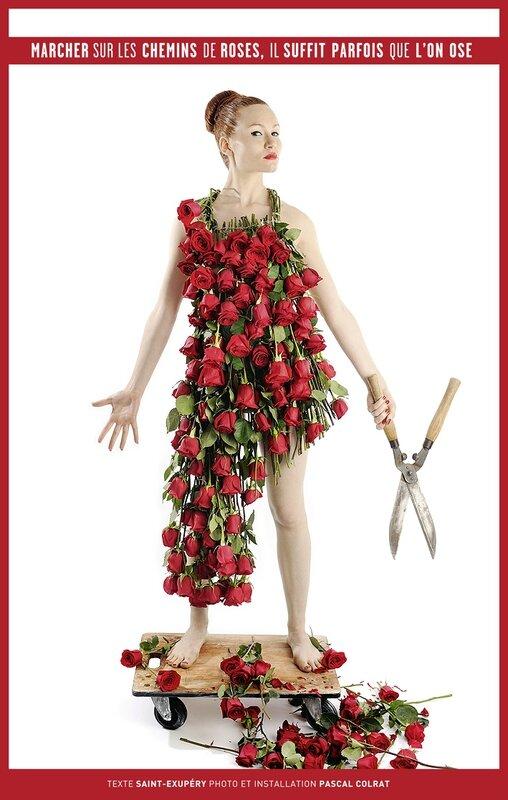rosesbd