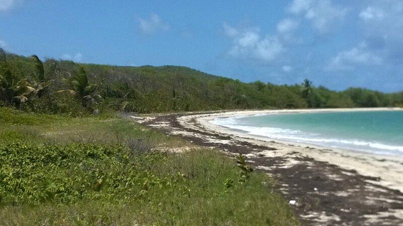 Martinique (176)
