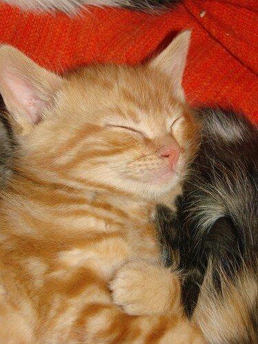 2008 04 22 Le petit chat tigré qui dore