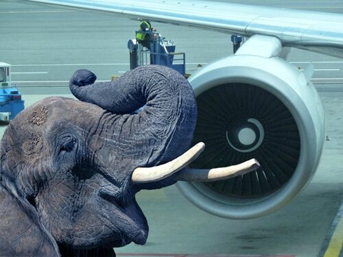 éléphant de fred forest