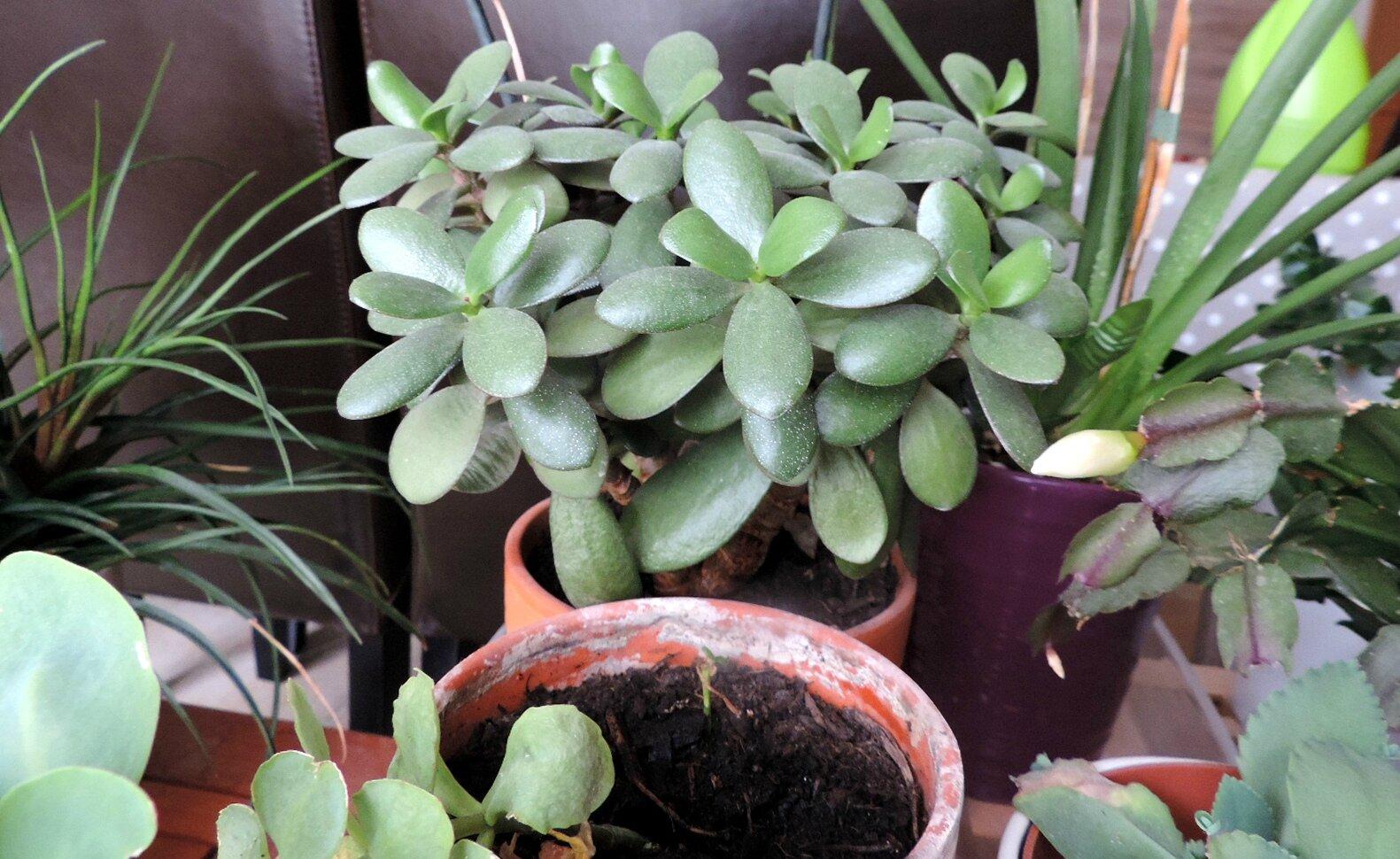 plantes grasses tous les messages sur plantes grasses