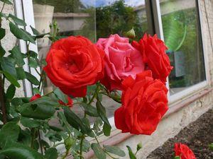 rosier véranda