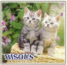 images bisous chat