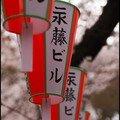A la recherche des sakuras