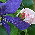Fleur au jardin 21 06 2012 069