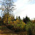 5-Feuilles d'automne