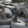05 Les Marmottes (78)