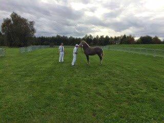 Espion du Boncoin - 25 Octobre 2014 - Concours de Poulains - Bourbourg - 3e (mâles nés avant le 19 Mai 2014)