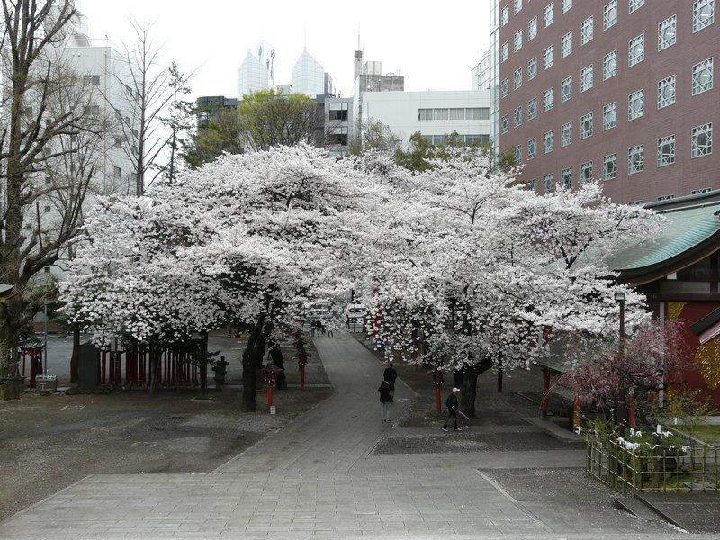 Canalblog Tokyo Cerisier 2010 Temple Hanazono02