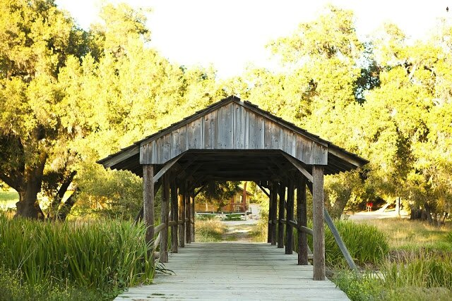 covered-bridge-tree-lined