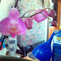 orchid08