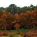 Linxe automne 24101512