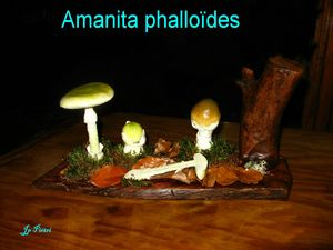 Amanita phalloïdes n°