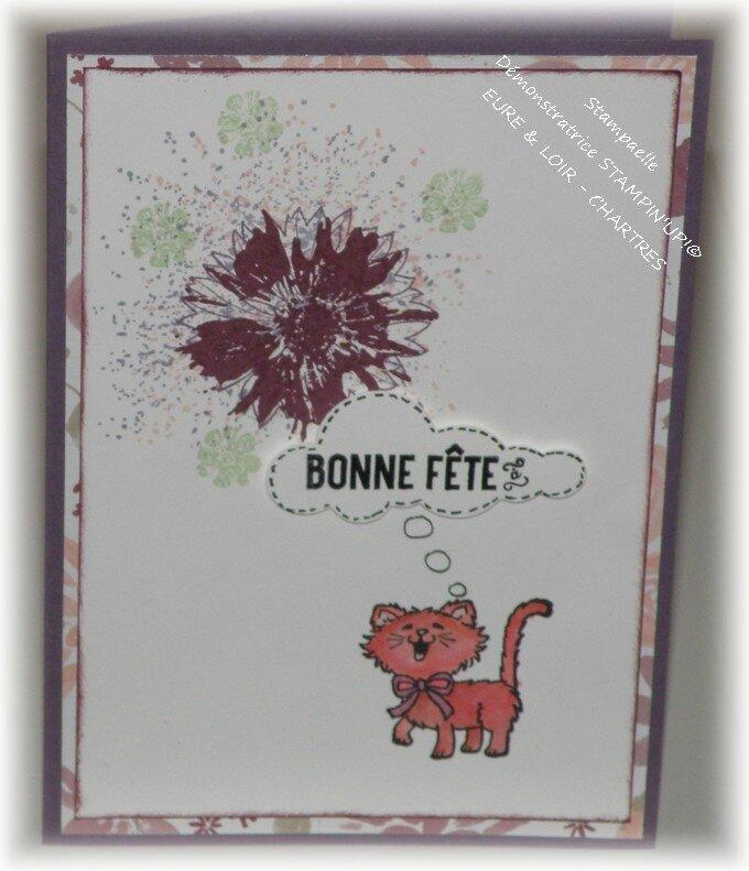 chats sandrine (2)