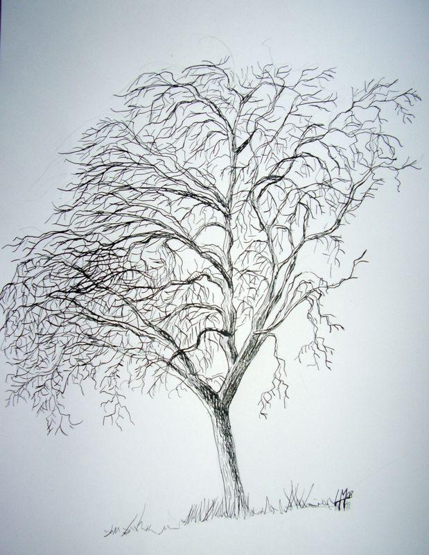 Arbre en hiver les pinceaux de malela - Croquis arbre ...