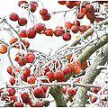 Paysages d'hiver pour changer des recettes....la nature est parfois magique!