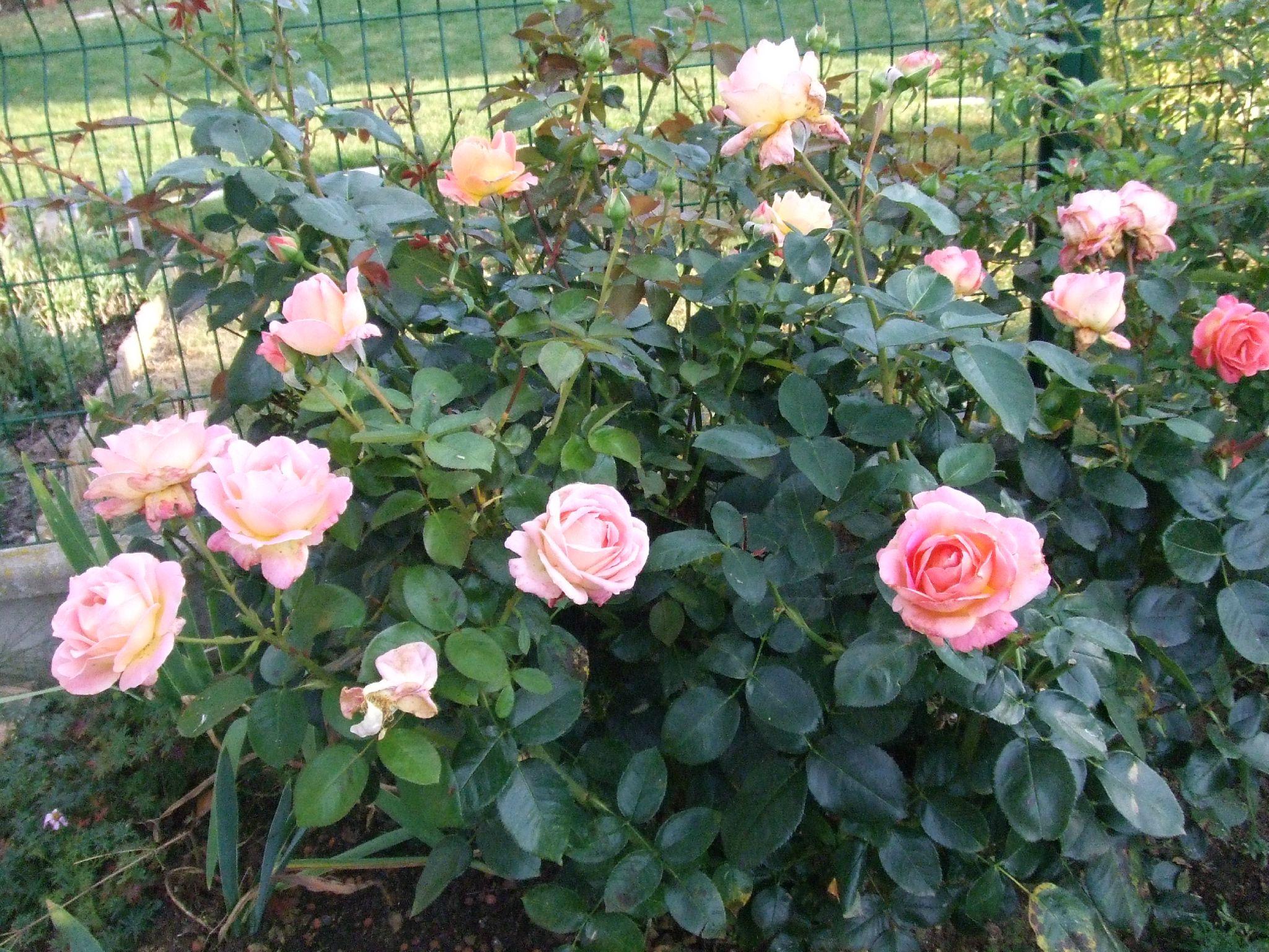 Octobre au jardin sous ma gloriette for Jardin octobre