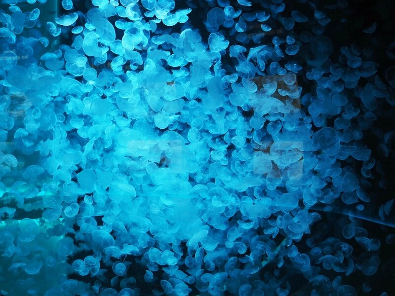 8-aquarium-mare-nostrum-odysseum-montpellier-ma-rue-bric-a-brac