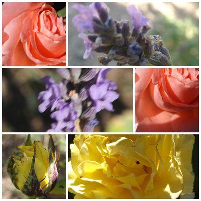 Conserves & jardin (7)