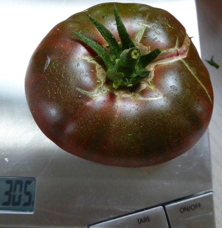 4-tomate noire de crimée
