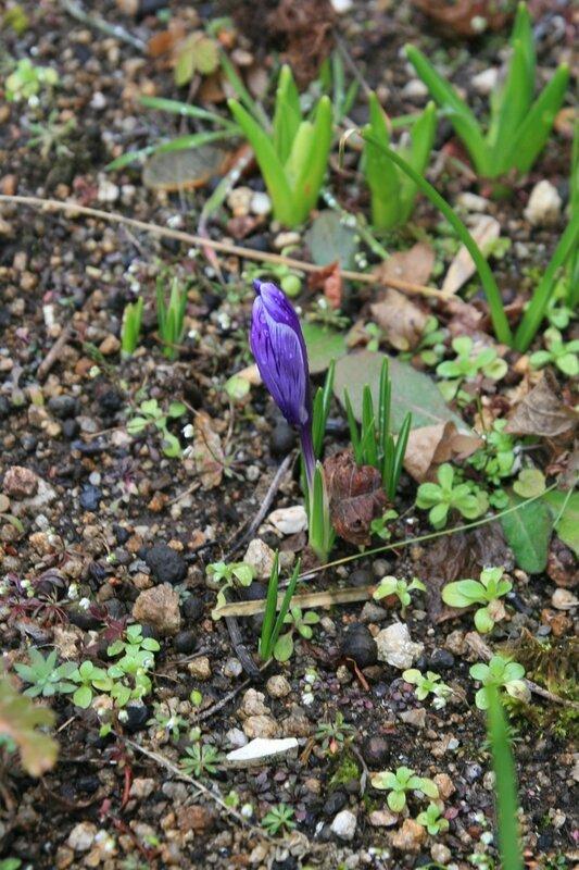 composteur-printemps-février-bulbe